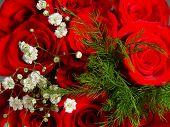 Close-up van een dozijn rozen