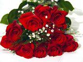 Closeup Of A Dozen Roses