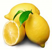 stock photo of dainty  - lemon - JPG