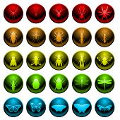 Spider and insect icon set