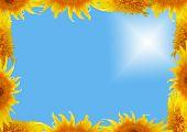 Frame From Sunflower