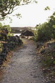 image of scoria  - a path winds around the rocky shore of rangitoto island hauraki gulf new zealand - JPG