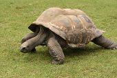 Huge turtle