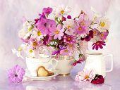 Stillleben mit Blumen und eine Tasse kosmeya