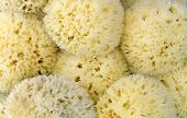 Closeup of natural sea sponges