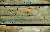 picture of tadpole  - Tadpoles silhouetted on green and orange boardwalk slightly submerged - JPG