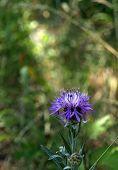 Lovely dark blue flower