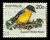 AUSTRALIA-CIRCA 1979:A stamp printed in AUSTRALIA shows image of The Eastern Yellow Robin (Eopsaltri