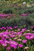 Spring Wild Flowers - Paros Island, Greece