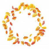 Oak, Maple, Wild Ash Rowan Leaves Vector, Autumn Foliage On White Background. Red Gold Yellow Sorbus poster