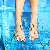 Fish Spa pedicure - Rufa Garra pedicure treatment. Closeup of woman enjoying skin care fish spa beau