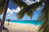 A Look At The Caribbean Sea Through The Branches Of A Coconut Palm. Landscape Of Paradise Tropical I poster