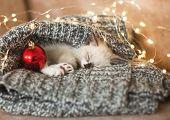 Kitten sleep in christmas hat. Little cat sleep on sofa near christmas light poster