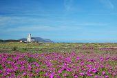 Lighthouse Olbia