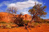 Monument Valley Desert Landscape poster