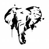 Elephant Black, Brush Strokes And Splashes, Elephant Face, Vector Illustration poster