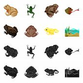Vector Design Of Wildlife And Bog Logo. Set Of Wildlife And Reptile Vector Icon For Stock. poster