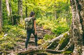 Forest hike trail hiker woman walking in autumn fall nature background in fall season. Hiking active poster