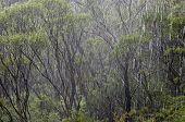 Rain Forest, New South Wales, Australia.