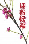 Greetings With Plum Blossom