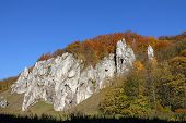 Autumnal forest and white rock, Poland , Ojcow, National Park.
