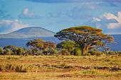 Savanna landscape and its flora in Africa, Amboseli, Kenya