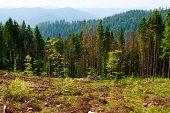Felled area in Carpathian mountains, Ukraine