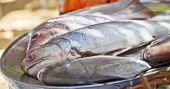 Selection Of Fresh Fish On Silver Platter