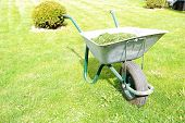 Gardening season - green grass with wheelbarrow