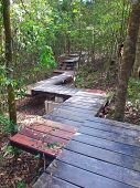 Boardwalk In Deep Forest