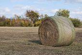Farmers Branch Hay Bale