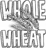 Whole wheat food sketch