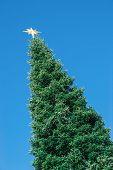 Top Of A Huge Christmas Tree