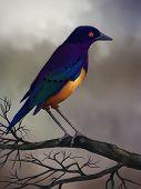 Starling sobre una rama - pintura Digital