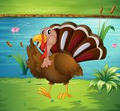 Illustration of a turkey walking near the river