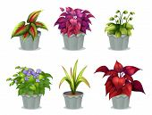 picture of six-petaled  - Illustration of six different plants on a white background - JPG