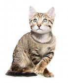 Cute kitten looking up on a white background