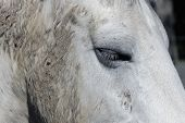 White Horse Close Up