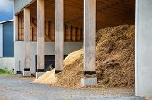 Wood chips to be turned into bio fuel