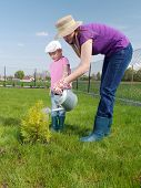 Mom and her cute little daughter watering together newly planted thuja tree in their backyard garden