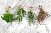 Herbs hanging and drying of parsley, sage, rosemary and thyme on string line with ladybird pegs over marble background.