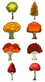 Illustration of the eight different trees on a white background
