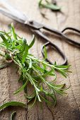 fresh rosemary herb on wooden background
