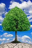 The Tree Grows On Dry Ground Against The Sky.