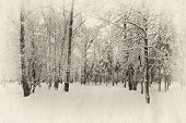 winter forest covered with snow, retro illustration