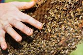 picture of bee keeping  - Closeup of Beekeeper - JPG