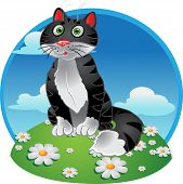 Black funny sitting cat on color background