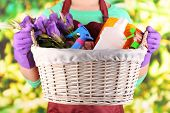 Housewife holding basket with cleaning equipment on bright background. Conceptual photo of spring cl