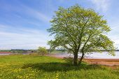A tree along the shoreline in rural Prince Edward Island, Canada.