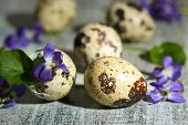 Easter composition with violets flowers in egg shells on wooden table